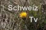 Schweiz-TV